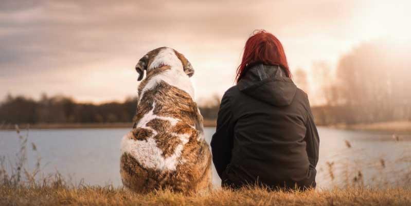 Casos de custodia compartida de animales