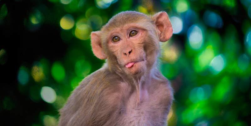 monos domesticos en venta